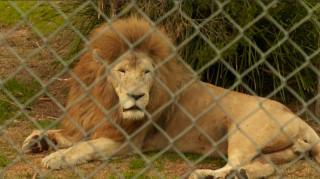 Πυρκαγιές Αυστραλία: Έσωσαν 200 άγρια ζώα από βέβαιο θάνατο