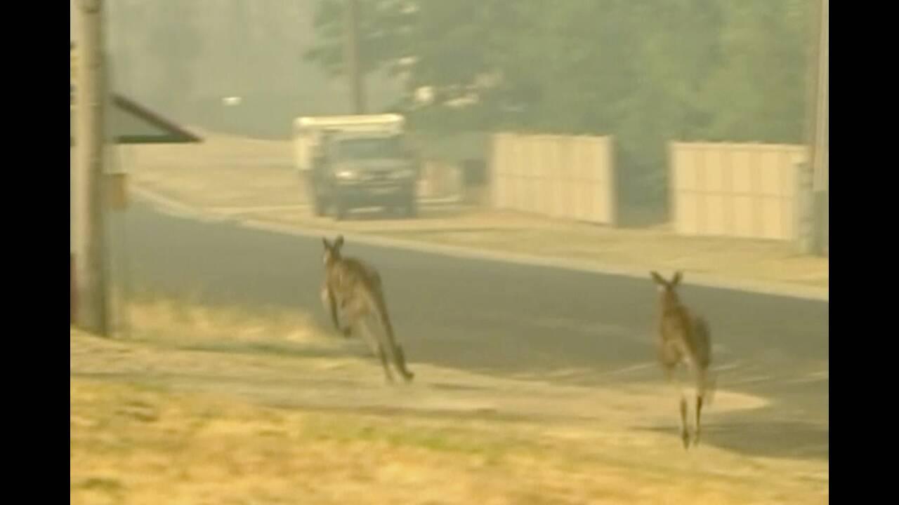 https://cdn.cnngreece.gr/media/news/2020/01/04/202911/photos/snapshot/kangaroo1.jpg