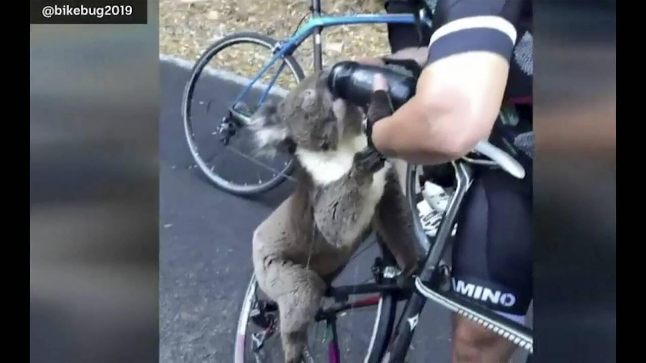 https://cdn.cnngreece.gr/media/news/2020/01/04/202911/photos/snapshot/koala.jpg