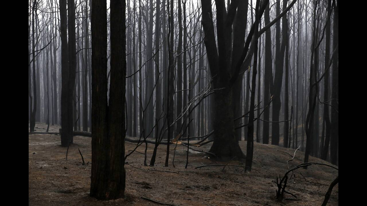 https://cdn.cnngreece.gr/media/news/2020/01/06/203124/photos/snapshot/australia-wildfires.jpg