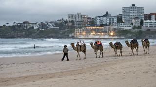 Αυστραλία: Ελεύθεροι σκοπευτές σκότωσαν πάνω από 5.000 καμήλες εν μέσω ξηρασίας