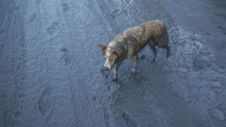 Έκρηξη ηφαιστείου Ταάλ στις Φιλιπίννες: Σκληρές εικόνες ζώων θαμμένων στη στάχτη