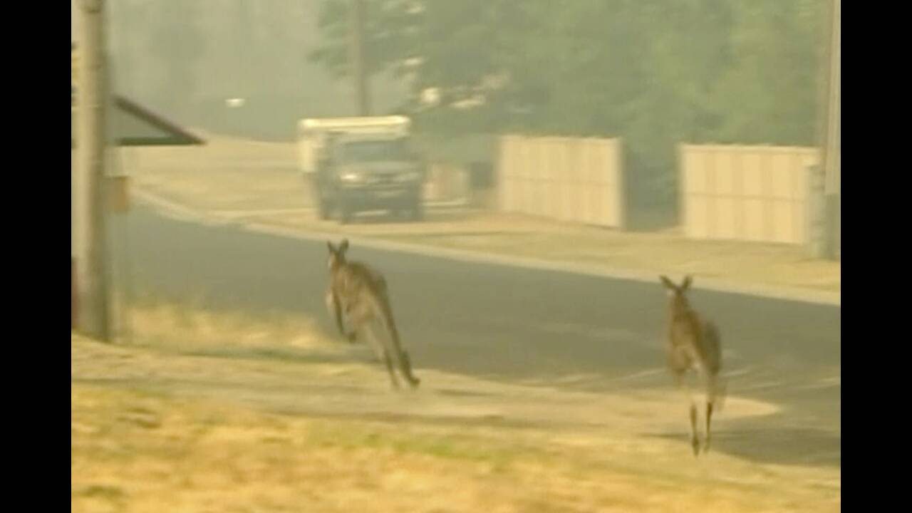 https://cdn.cnngreece.gr/media/news/2020/01/16/204205/photos/snapshot/kangaroo1.jpg