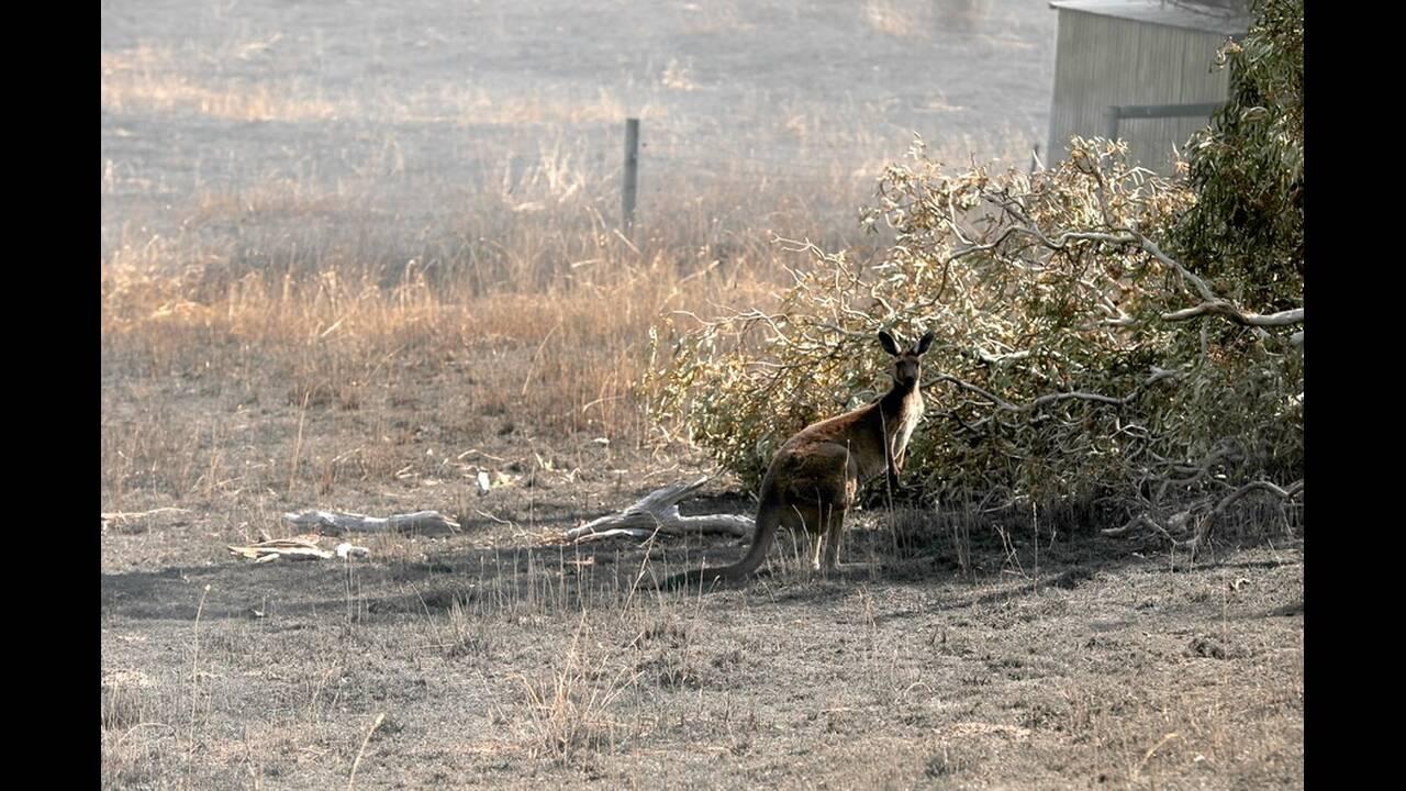 https://cdn.cnngreece.gr/media/news/2020/01/16/204205/photos/snapshot/kangaroo2.jpg