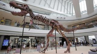 Γιατί εξαφανίστηκαν οι δεινόσαυροι; Νέα έρευνα δείνει οριστική απάντηση