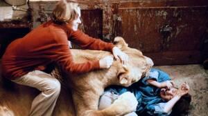 Roar (1981). Πέντε χρόνια γυρισμάτων τρόμου. Αυτό ήταν το Roar, μία ταινία που βρήκε όλα τα μέλη του καστ και του συνεργείου να γεμίζουν με ράμματα από τις επιθέσεις που τους έκαναν τα τεράστια λιοντάρια. Πάνω από 70 ήταν οι επιθέσεις που δέχθηκε το καστ