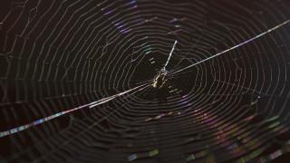Αυστραλία: Φωτιές, πλημμύρες και τώρα... φονικές αράχνες