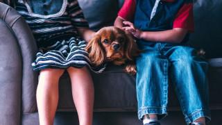 Τι προσφέρει η ύπαρξη ενός κατοικίδιου σε μία οικογένεια και πώς επιδρά στη ζωή του παιδιού;