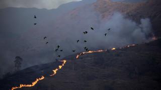 Βενεζουέλα: Έντεκα παιδιά κάηκαν ζωντανά ενώ κυνηγούσαν κουνέλια για να φάνε