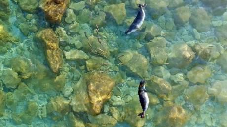 Λένα και Νικόλ: Επέστρεψαν στη θάλασσα οι φώκιες που είχαν βρεθεί ορφανές