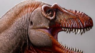 Θανατοθεριστής: Ανακαλύφθηκε νέο είδος τυραννόσαυρου στον Καναδά