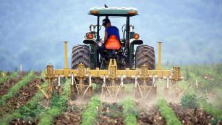 ΕΛΓΑ: Καταβάλλονται 2,1 εκατ. ευρώ σε παραγωγούς