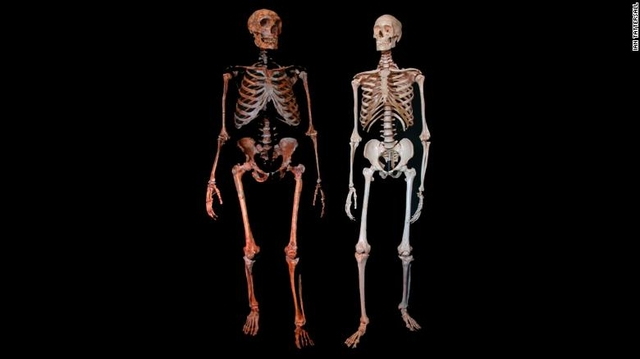 ancient finds neanderthal skeletons