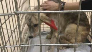 Ηγουμενίτσα: Ποινή φυλάκισης 15 μηνών σε άνδρα για κακοποίηση σκύλου