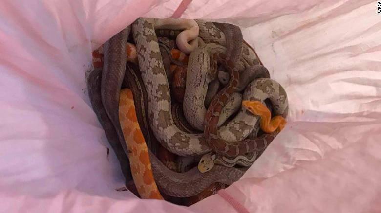 Μυστήριο στη Βρετανία με μαξιλαροθήκες γεμάτες… φίδια