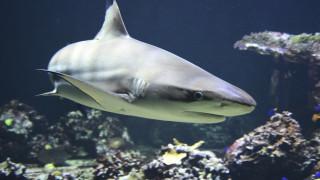 Φλόριντα: Συγκλονιστικό βίντεο – Σέρφερ κατέγραψε παραλία που κολυμπούσαν δεκάδες καρχαρίες