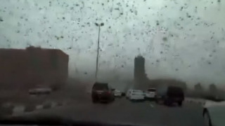 Επιδρομή… ακρίδων στο Μπαχρέιν - «Μαύρισε» ο ουρανός