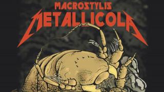 Ανακαλύφθηκε το πιο… metal οστρακόδερμο: Ονομάζεται Metallica και εντυπωσιάζει!