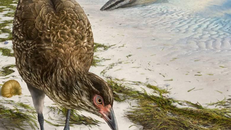 Ανακαλύφθηκε το αρχαιότερο απολίθωμα σύγχρονου πτηνού που έζησε πριν 67 εκατ. χρόνια