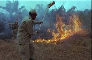 1998, Αμαζόνιος. Βραζιλιάνοι πυροσβέστες πολεμούν με τη δασική πυρκαγιά στην επαρχία Απιάου του Αμαζονίου. Η φωτιά έκαψε 600,000 εκτάρια ζούγκλας και σαβάνας.