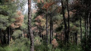 Κορωνοϊός: Απαγόρευση κυκλοφορίας στο δάσος του Σέιχ Σου