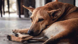 Απαγόρευση κυκλοφορίας: Τι ισχύει για τη φροντίδα αδέσποτων ζώων - Η αίτηση που συμπληρώνετε