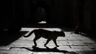 Βέλγιο: Γάτος βρέθηκε θετικός στον κορωνοϊό - Τι αναφέρουν ειδικοί