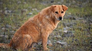 Απαγόρευση κυκλοφορίας: Η αίτηση που συμπληρώνετε για τη φροντίδα των αδέσποτων ζώων