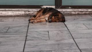 Απαγόρευση κυκλοφορίας: Πώς συμπληρώνετε την αίτηση για φροντίδα αδέσποτων ζώων