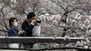 Homenami: Μόνο στο διαδίκτυο, φέτος, η απόλαυση των ανθισμένων κερασιών στην Ιαπωνία