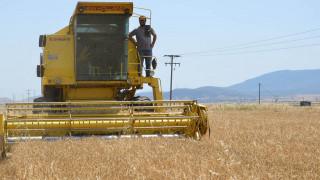 «Υπάρχει επάρκεια αλλά...»: Σε αποσυντονισμό η αγορά τροφίμων στην Ελλάδα