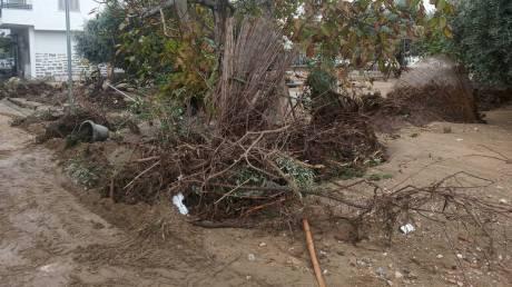 Κακοκαιρία: Αποκαταστάθηκαν οι βλάβες ηλεκτροδότησης στις πληγείσες περιοχές