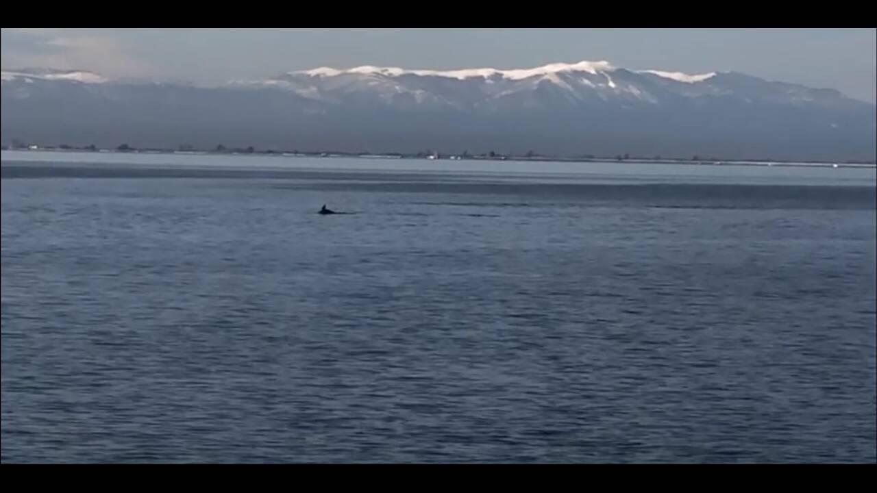https://cdn.cnngreece.gr/media/news/2020/04/07/214393/photos/snapshot/thessaloniki-delfinia-3.JPG