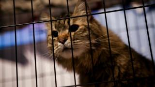 Φυλάκιση 15 μηνών σε άνδρα που σκότωνε γάτες – Επικυρώθηκε από τον Άρειο Πάγο η απόφαση