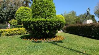 Δήμος Αθηναίων: 8.500 νέα φυτά στην πόλη από τις αρχές Μαρτίου