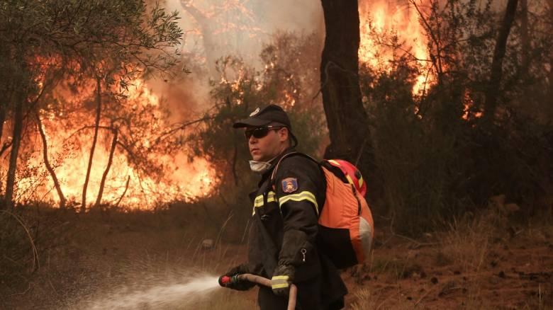 Μεγάλη πυρκαγιά σε δάσος στη Ροδόπη