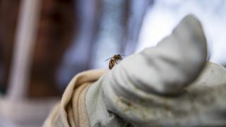 Έρχεται ο Αρμαγεδδών των εντόμων; Όχι ακόμη, λένε οι επιστήμονες