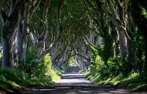 Dark Hedges, Bregagh Road, Αντρίμ, Βόρεια Ιρλανδία