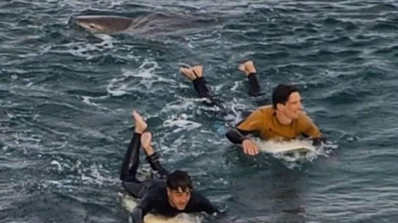 Βίντεο: Καρέ-καρέ η αγωνιώδης προσπάθεια δύο ανδρών να γλιτώσουν από καρχαρία