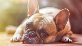 Οι σκύλοι περνούν τη δική τους δύσκολη εφηβεία