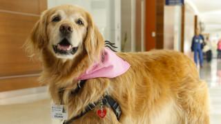 Μπορούν να ανιχνεύσουν τον κορωνοϊό οι σκύλοι; Βρετανοί ξεκινούν έρευνα