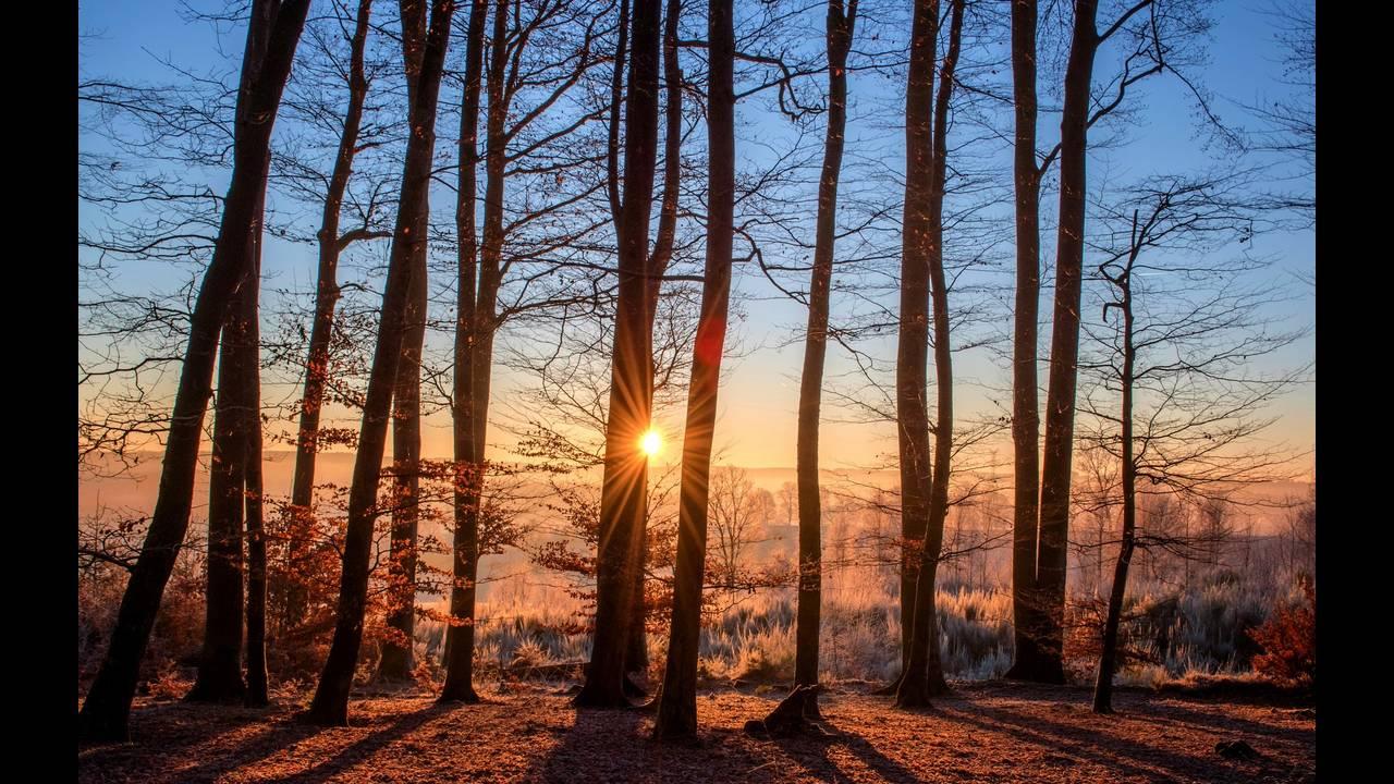 https://cdn.cnngreece.gr/media/news/2020/05/20/220034/photos/snapshot/forest-1950402_1920.jpg