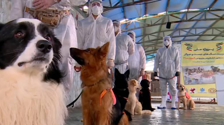 Κορωνοϊός: Εκπαιδεύουν σκύλους που θα εντοπίζουν τον ιό