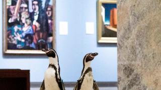 Πιγκουίνοι επισκέπτονται ένα κλειστό μουσείο και χαζεύουν τους πίνακες (pics&vid)