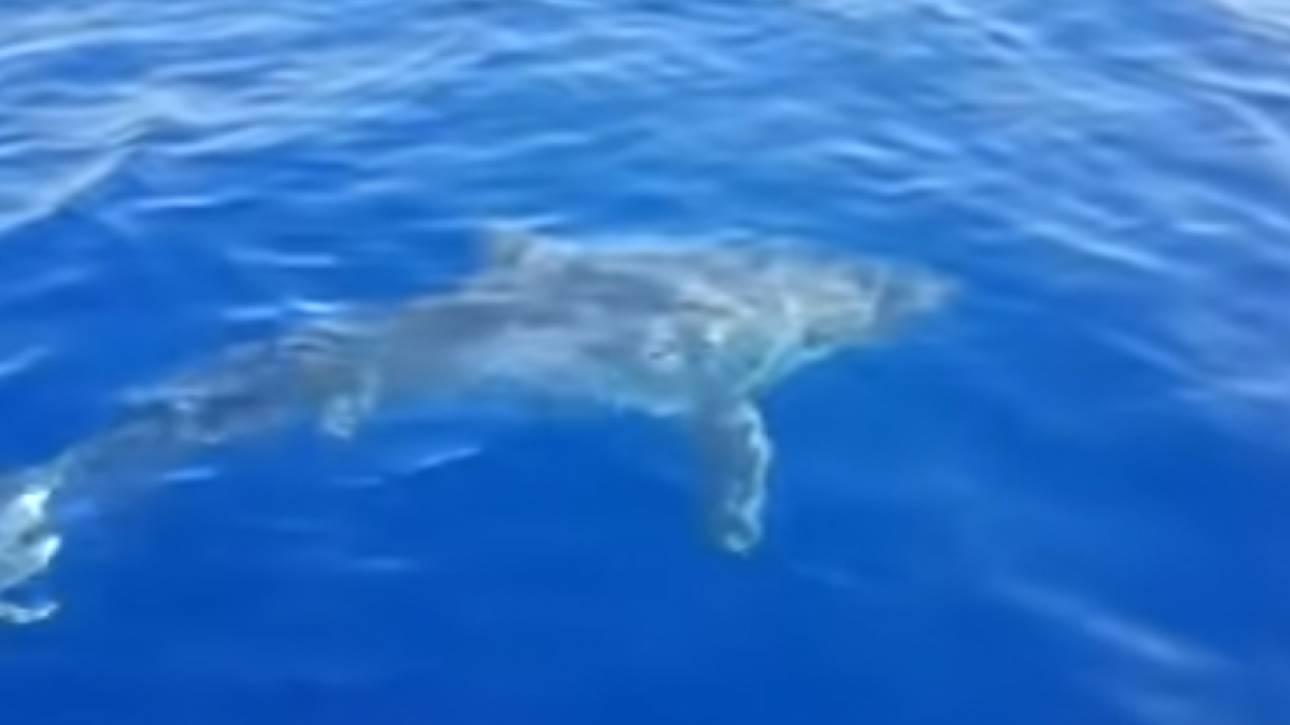 Βίντεο που «κόβει» την ανάσα: Λευκός καρχαρίας πλησίασε σκάφος ανοιχτά της Λαμπεντούζα