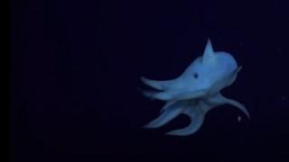 Ντάμπο: Το χταπόδι «φάντασμα» καταγράφηκε σε βάθος επτά χιλιομέτρων