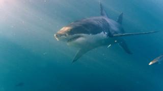 Αυστραλία: Νεκρός σέρφερ από επίθεση λευκού καρχαρία