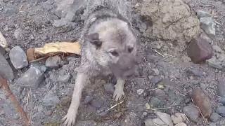 Καρέ - καρέ η συγκλονιστική διάσωση σκύλου από καταστροφική κατολίσθηση
