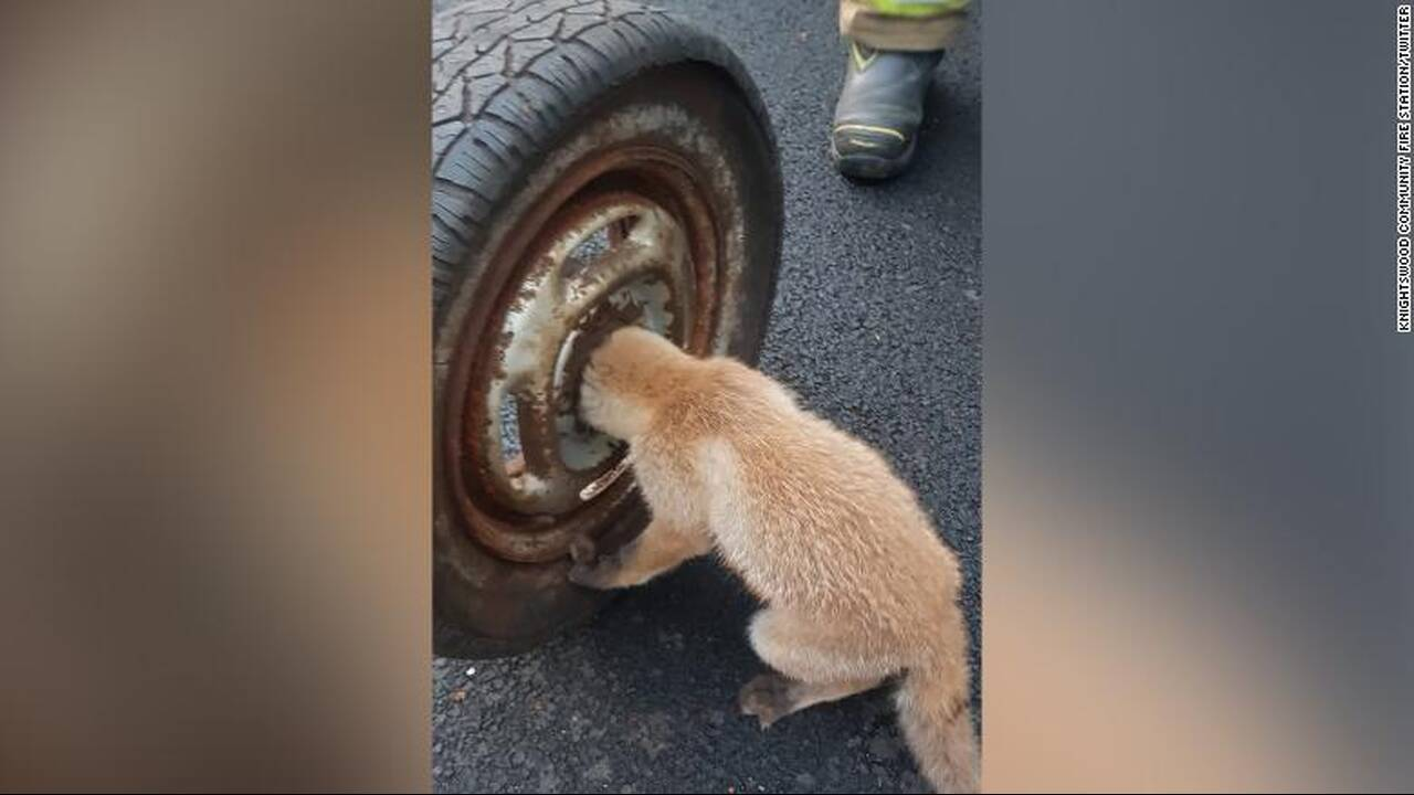 https://cdn.cnngreece.gr/media/news/2020/06/08/222462/photos/snapshot/200608095529-02-uk-fox-cub-rescue-exlarge-169.jpg