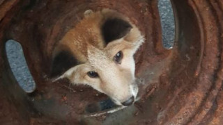 Πυροσβέστες απελευθέρωσαν αλεπουδάκι που είχε εγκλωβιστεί σε ρόδα